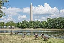 Constitution Gardens, Washington D.C., July 2017 02.jpg