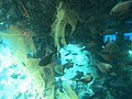 Coral World Underwater Observatory 29.jpg