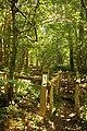 Cotthembos, Vallei van de Cotthembeek 03.jpg
