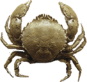 Crab-icon.png