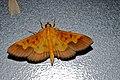 Crambid Moth (8093642461).jpg