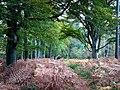 Creech Woods - geograph.org.uk - 1023746.jpg