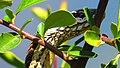 Culebra Asoleandose (84059005).jpeg