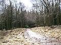 Cycleway - geograph.org.uk - 143746.jpg