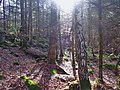 Dalbeattie Town Woods - geograph.org.uk - 1431931.jpg