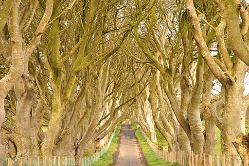 Dark Hedges, County Antrim, Northern Ireland (6961336542) (2)
