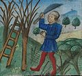 De Grey Hours f.2.r. February - pruning trees.jpg