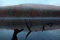 Dead-tree-autumun-lake-reflection - West Virginia - ForestWander.jpg