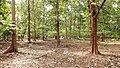 Deer Park and reserve forest @ Walayar - panoramio (3).jpg