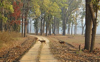 Deers crossing the safari trail.jpg