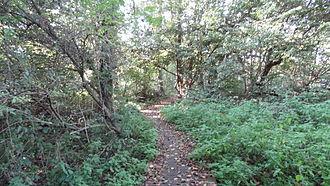 Denham Lock Wood - Image: Denham Lock Wood path