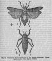 Descent of Man - Burt 1874 - Fig 15.png