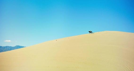 File:Desert Horse - Leica Thalia.webm