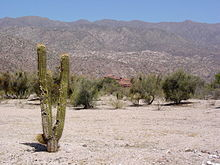 Desert scenery in La Rioja Province showing a cactus and mountains in the background