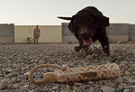 Detection team sharpens skills, protects Marines from IED 111021-M-PH863-004.jpg