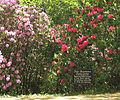 Dexter Rhododendron Garden.jpg