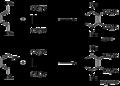 Diels-alder stereochemistry 2.png