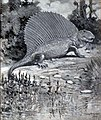 Dimetrodon Knight.jpg