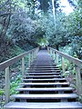 Dipsea Trail, the first stairway appears quite daunting. It doesn't get any easier for quite a distance. - panoramio.jpg