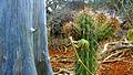 Dirceu Arcoverde-Bioma Caatinga-Retratos Negados-Esrom Mota.jpg