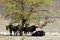 Driving through the Namib Desert (26606234158).jpg