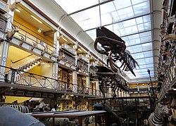 Natural History Museum Ireland Wikipedia