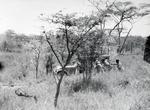 ETH-BIB-Jeep in der Serengeti-Kilimanjaroflug 1929-30-LBS MH02-07-0293.tif