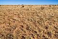 East of the Hueco Mountains - Flickr - aspidoscelis (4).jpg