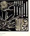 Echinodermes (astéries, ophiures et échinides) (1912) (20952031219).jpg