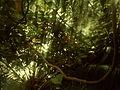 Edinburgh Botanic Gardnes (2297035864).jpg