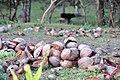 El Nido, Palawan, Philippines - panoramio (36).jpg