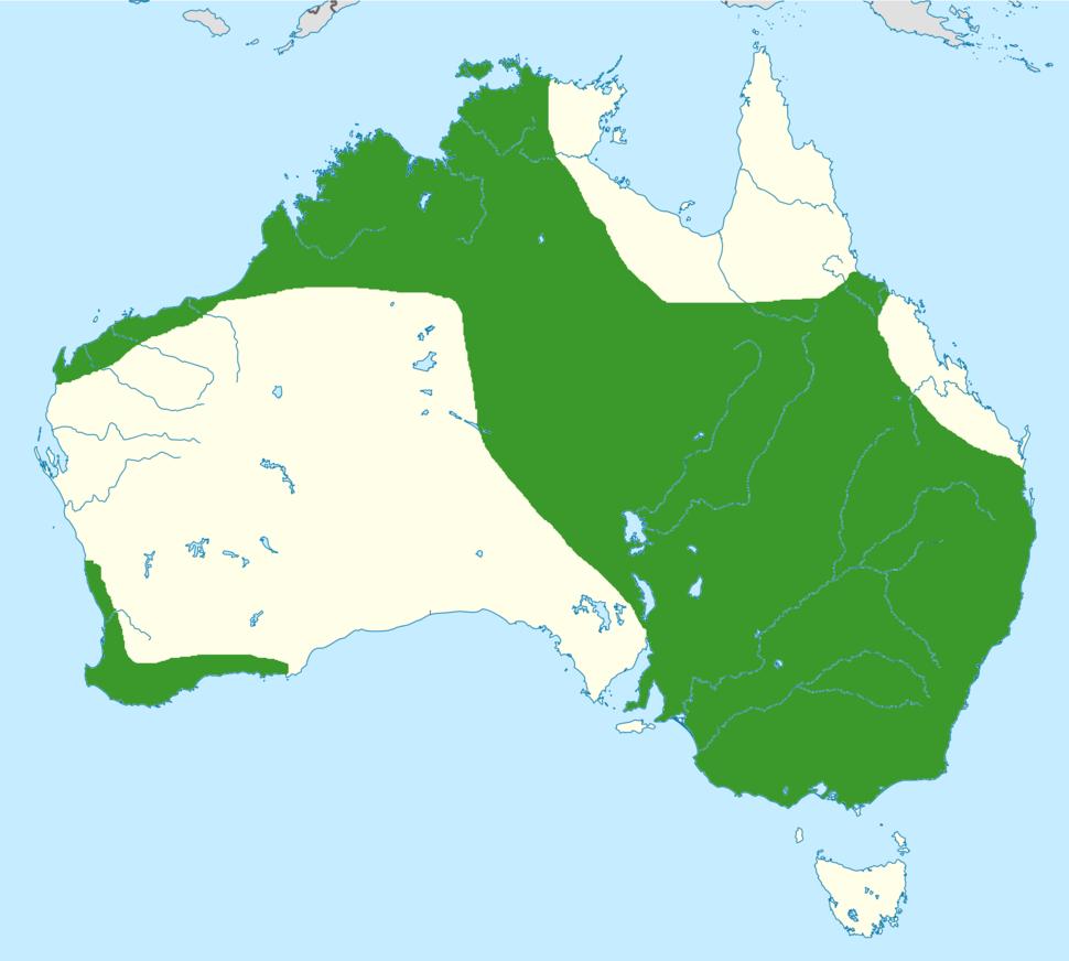 Elanus scriptus range map
