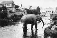 Elephant escapes in Monmouth