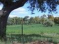 Encinas - panoramio.jpg