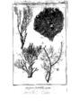 Encyclopedie volume 5-141.png