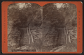 Entrance gorge, looking in, Watkins Glen, by W. S. Jones.png