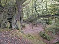 Ercall Wood Nature Reserve - geograph.org.uk - 56176.jpg