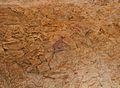 Escena de caça de càprid, cavitat II, cova Remígia.JPG