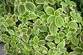 Espèces tropicales-Jardin des plantes de Nantes (3).jpg