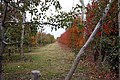 Espaldera en otoño - panoramio.jpg
