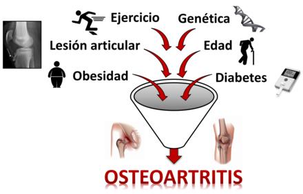 clasificacion primaria de solfa syllable artrosis