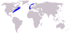 North Atlantic right whale range