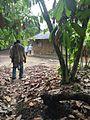 Exploitation agricole de Ekoum.jpg