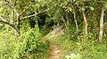 Ezhattumukam , Chalakudy Forest - panoramio.jpg