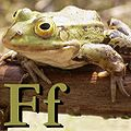 F is for Frog.jpg