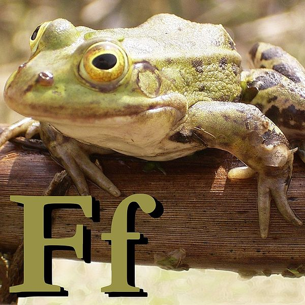 Файл:F is for Frog.jpg