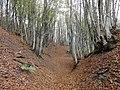 Faggeto d'autunno - panoramio.jpg