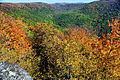 Fall-foliage-changing-mountains - Virginia - ForestWander.jpg