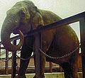 Fanny the elephant.jpg