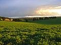 Farmland, Brightwalton - geograph.org.uk - 892045.jpg